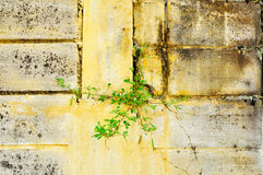 Cement wall with plant Stock Photography