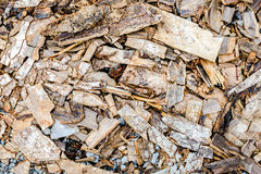 Cement wall and scraps of wood ground,texture background Stock Images