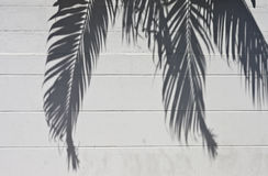 Cement wall with a shade from palm trees Stock Photography