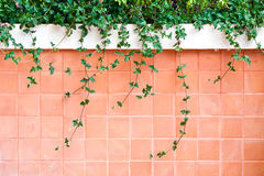 Cement wall with tree on the top Stock Images