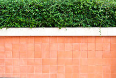 Cement wall with tree on the top Royalty Free Stock Photography