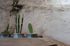 Cemente la pared decorativa con el cactus y la tabla de madera áspera haga que un cierto espacio para escriba la fraseología Foto de archivo libre de regalías