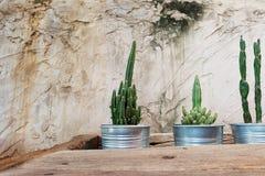 Cemente la pared decorativa con el cactus y la tabla de madera áspera haga que un cierto espacio para escriba la fraseología Fotos de archivo libres de regalías