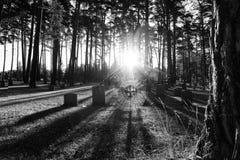 Cementerio con el web de araña Fotos de archivo libres de regalías