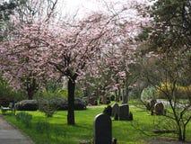 Cementerio en primavera en el sol Fotos de archivo libres de regalías
