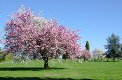 Cementerio herboso del cementerio Imagen de archivo