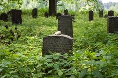 Cementerio judío abandonado en el bosque cerca de Havlickuv Brod, República Checa, sepulcros rodeados con las malas hierbas Imagen de archivo