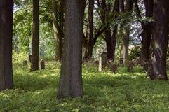 Cementerio judío abandonado en el bosque cerca de Havlickuv Brod, República Checa, sepulcros rodeados con las malas hierbas Imagenes de archivo