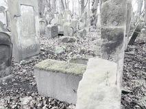 Cementerio judío en Polonia Imágenes de archivo libres de regalías