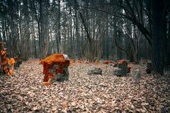 Cementerio místico en el bosque Foto de archivo libre de regalías