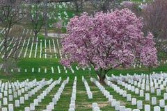 Cementerio nacional de Arlington con Cherry Blossom y GR hermosos imagen de archivo libre de regalías
