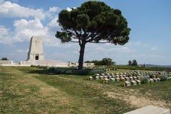 Cementerio solitario del monumento del pino Foto de archivo libre de regalías