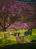 Cementery in spring Stock Photography