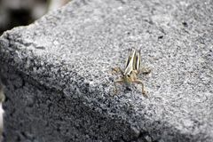 CementHopper royaltyfri bild