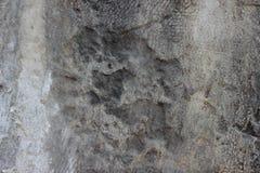 Cementi la parete con le crepe ed allenti i pezzi di struttura sporca della pittura Immagini Stock