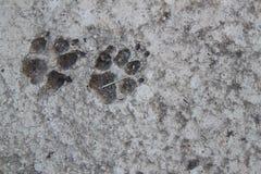 Cemento de la huella del perro Fotos de archivo
