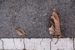 Cemento de las hojas Imagen de archivo