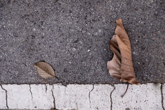 Cemento delle foglie immagine stock