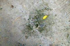 Cemento frantumato con struttura del fungo fotografia stock