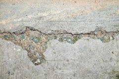 Cemento incrinato con struttura del fungo fotografie stock