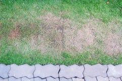 Cementowa cegła i zielona trawa Obrazy Royalty Free