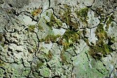 cementowa stara ściana Obrazy Stock