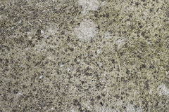 Cementowe tekstury Obraz Stock