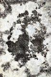 Cementowy pionowo tło Obraz Royalty Free