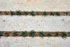Cementremsa med växtmodellen Royaltyfri Foto