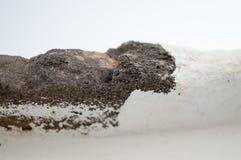 Cementsvampstruktur i tropikerna Arkivbilder