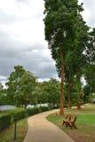 Cementväg och stora träd Fotografering för Bildbyråer