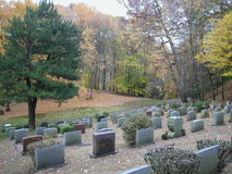 Cemetary In Autumn. A cemetery is situated along a hillside overlooking a forest. Fallen leaves from autumn are scattered across the ground. One lone tree still Royalty Free Stock Images