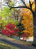 Cemetery. Old historic cemetery with colorful autumn trees Stock Images