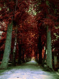 Cemetery alley. Alley of trees in the cementery stock image