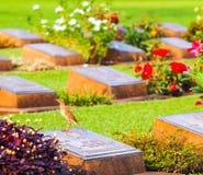 Cemetery. alone in the cemetery.Chung Kai Allied War Cemetery Memorial. Kanchanaburi.Thailand. Stock Image
