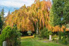 Cemetery in the Altona district of Hamburg Stock Photography