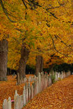 Cemetery in Autumn. Rows of old gravestones in a cemetery in autumn with a blanket of orange leaves Stock Photo