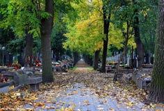 Cemetery avenue. In the autumn stock photos