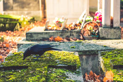 Cemetery and black raven Stock Photos