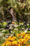 Cemetery Flowers. Military Cemetery with Flowers in The Dolomites Stock Photography
