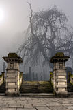 Cemetery on a foggy day Stock Photo