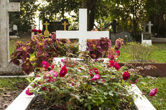 Cemetery graveyard and roses in the morning Royalty Free Stock Photos