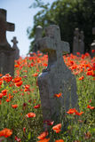 Cemetery headstone with poppies. In the background Stock Photos