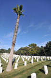Cemetery with palmtree and gravestones. Royalty Free Stock Photo