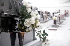 Cemetery roses. Bunch of white roses at a grave site Stock Images
