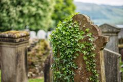 Cemetery, scotland historical gravestones with plant. Tips for travel, photography in summer Stock Photography
