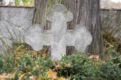 Cemetery stone sculpture, conciliation cross. Hidden in green shrub next the tree, cemetery grey wall on background Royalty Free Stock Photos