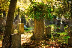 Cemetery With Sunray In Autumn Stock Images