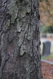 Cemetery tree texture wooden nature bark royalty free stock photography