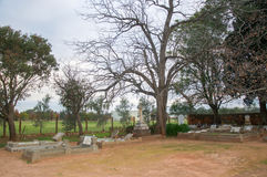 Cemetery at Twilight. HENLEY BROOK,WA,AUSTRALIA-JULY 15,2016: All Saints Church cemetery with large leafless tree at twilight in Henley Brook, Western Australia royalty free stock image